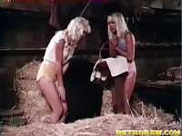 Lesbians in the hay